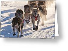 Team Of Sleigh Dogs Pulling Greeting Card