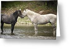 Tender Moments - Wild Horses  Greeting Card