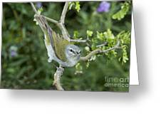 Tennessee Warbler Greeting Card