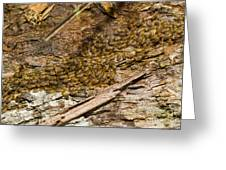 Termites On Log Greeting Card by William H. Mullins
