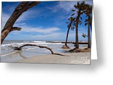 The Beach At Hunting Island State Park Greeting Card