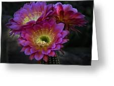 The Beauty Of The Desert  Greeting Card