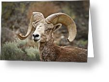 The Bighorn Greeting Card