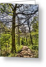 The Forest Path Greeting Card by David Pyatt