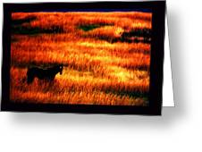 The Golden Grain Of A Sunset Dream Greeting Card