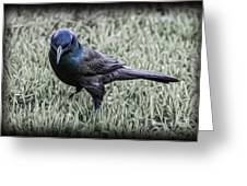 The Grackle Greeting Card by Jeff Swanson
