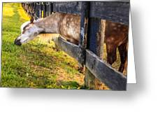 The Grass Is Greener... Greeting Card