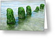 The Green Jetty Greeting Card