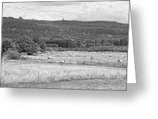 The Hay Field Greeting Card