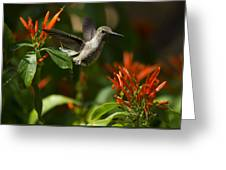 The Hummingbird Hover  Greeting Card