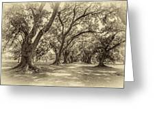 The Lane Sepia Greeting Card by Steve Harrington