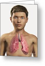 The Lungs Within The Body Pre-adolescent Greeting Card