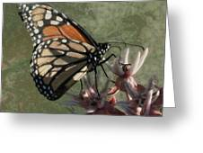 The Monarch Painterly Greeting Card