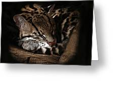 The Ocelot Greeting Card