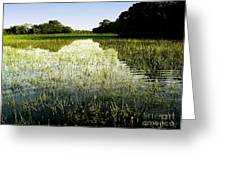 The Pantanal Greeting Card