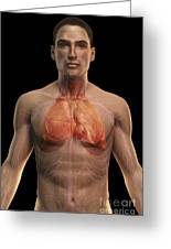 The Respiratory And Cardiovascular Greeting Card
