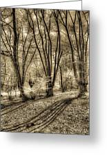 The Spring Forest Greeting Card
