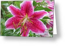 The Stargazer Greeting Card
