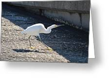 The Strut Greeting Card