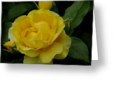 Yellow  Rose Of Summer Greeting Card