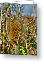Thistle On Sunny Autumn Day Greeting Card