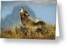 Timber Wolf Howling Idaho Greeting Card