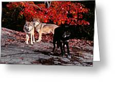Timber Wolves Under  A Red Maple Tree Greeting Card