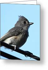 Titmouse Greeting Card