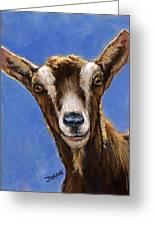 Toggenburg Goat On Blue Greeting Card