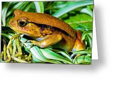 Tomato Frog Greeting Card