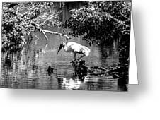 Tranquility Bw Greeting Card