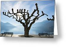 Tree And Bench Greeting Card