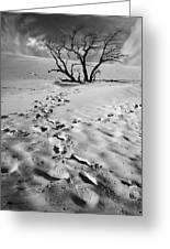 Tree Branch And Footprints On Sleeping Bear Dunes Greeting Card
