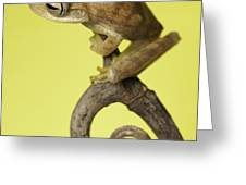 Tree Frog On Twig In Background Copyspace Greeting Card