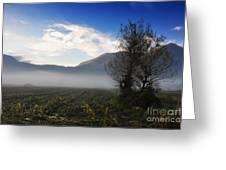 Tree With Fog Greeting Card