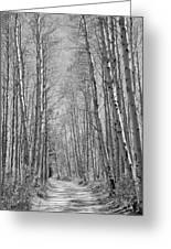 Trees Along A Road, Log Cabin Gold Greeting Card