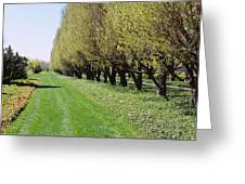 Trees Along A Walkway In A Botanical Greeting Card