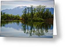 Trees And Lake Greeting Card