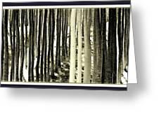 Trees Greeting Card