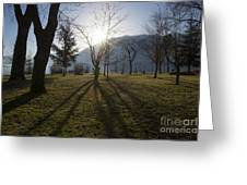 Trees In Backlit Greeting Card