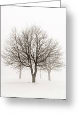 Trees In Winter Fog Greeting Card