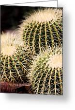 Triple Cactus Greeting Card