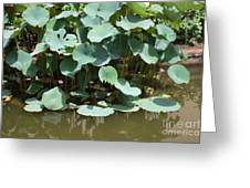 Water Plant Greeting Card