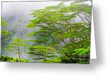 Tropical Forest, Seychelles Greeting Card