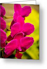 Tropical Orchid Flower Blossoms Greeting Card
