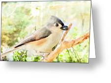Tufted Titmouse With Seed - Digital Paint Greeting Card