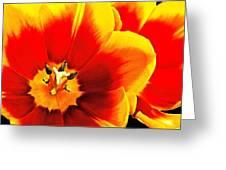 Tulip Intimacy Greeting Card