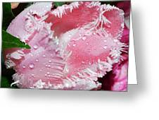 Tulip Lace Greeting Card by Felicia Tica