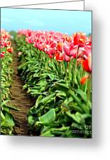 Tulip Trail Greeting Card