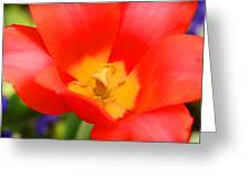 Tulips At Thanksgiving Point - 28 Greeting Card